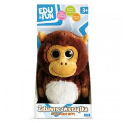 Zabawne zwierzątko małpka...